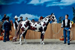 Hidalgo_showmanship_1.jpg